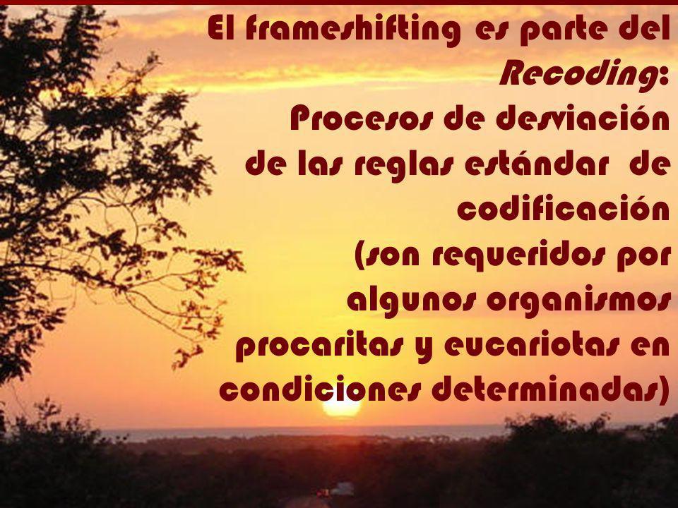El frameshifting es parte del Recoding: Procesos de desviación de las reglas estándar de codificación (son requeridos por algunos organismos procarita