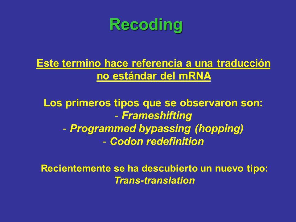 Recoding Este termino hace referencia a una traducción no estándar del mRNA Los primeros tipos que se observaron son: - Frameshifting - Programmed byp