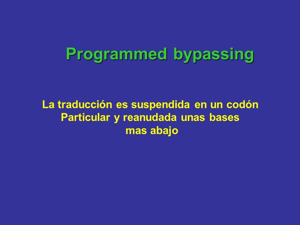 Programmedbypassing Programmed bypassing La traducción es suspendida en un codón Particular y reanudada unas bases mas abajo