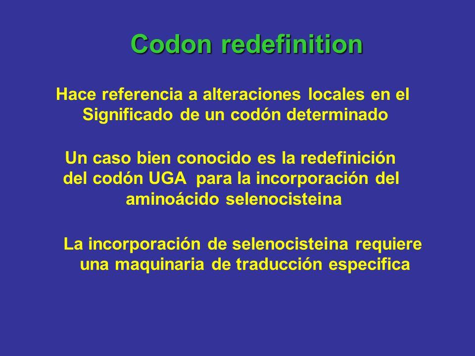 Codon redefinition Hace referencia a alteraciones locales en el Significado de un codón determinado Un caso bien conocido es la redefinición del codón