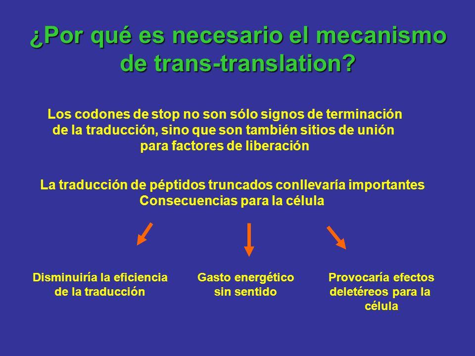 ¿Por qué es necesario el mecanismo de trans-translation? Los codones de stop no son sólo signos de terminación de la traducción, sino que son también
