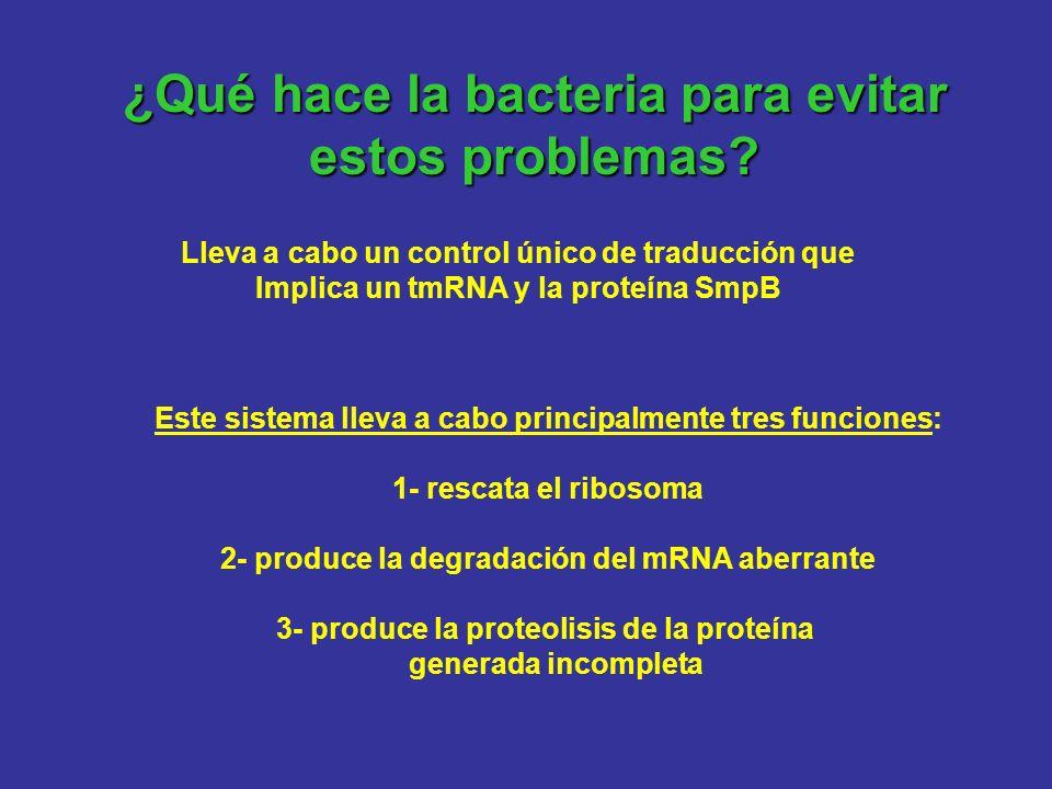 ¿Qué hace la bacteria para evitar estos problemas? Lleva a cabo un control único de traducción que Implica un tmRNA y la proteína SmpB Este sistema ll