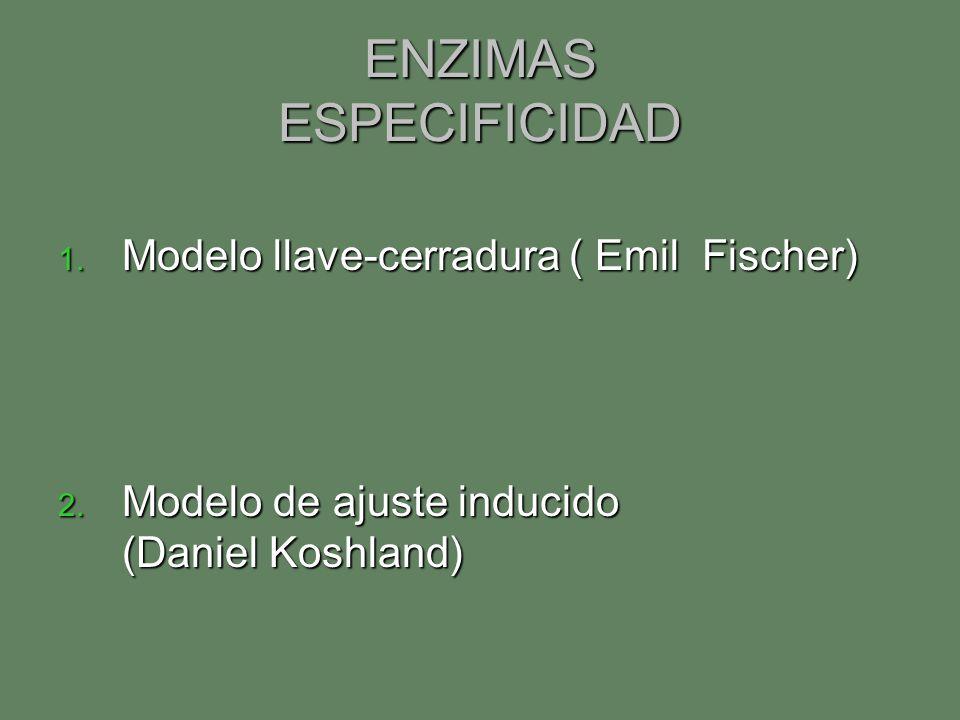 ENZIMAS ESPECIFICIDAD 1. Modelo llave-cerradura ( Emil Fischer) 2. Modelo de ajuste inducido (Daniel Koshland)