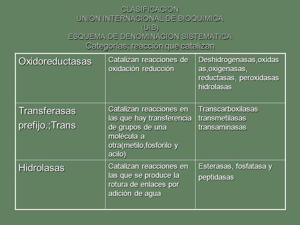 CLASIFICACION UNION INTERNACIONAL DE BIOQUIMICA (UIB) ESQUEMA DE DENOMINACION SISTEMATICA Categorías; reacción que catalizan Oxidoreductasas Catalizan
