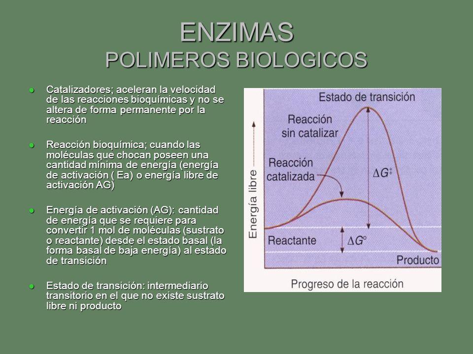 ENZIMAS POLIMEROS BIOLOGICOS Catalizadores; aceleran la velocidad de las reacciones bioquímicas y no se altera de forma permanente por la reacción Cat