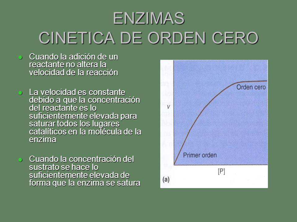 ENZIMAS CINETICA DE ORDEN CERO Cuando la adición de un reactante no altera la velocidad de la reacción Cuando la adición de un reactante no altera la