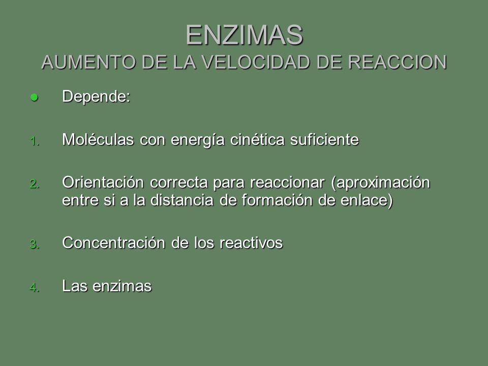 ENZIMAS AUMENTO DE LA VELOCIDAD DE REACCION Depende: Depende: 1. Moléculas con energía cinética suficiente 2. Orientación correcta para reaccionar (ap