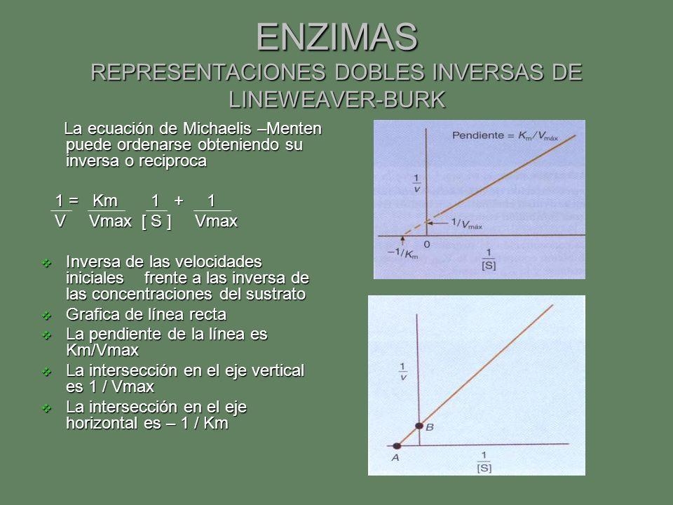 ENZIMAS REPRESENTACIONES DOBLES INVERSAS DE LINEWEAVER-BURK La ecuación de Michaelis –Menten puede ordenarse obteniendo su inversa o reciproca La ecua