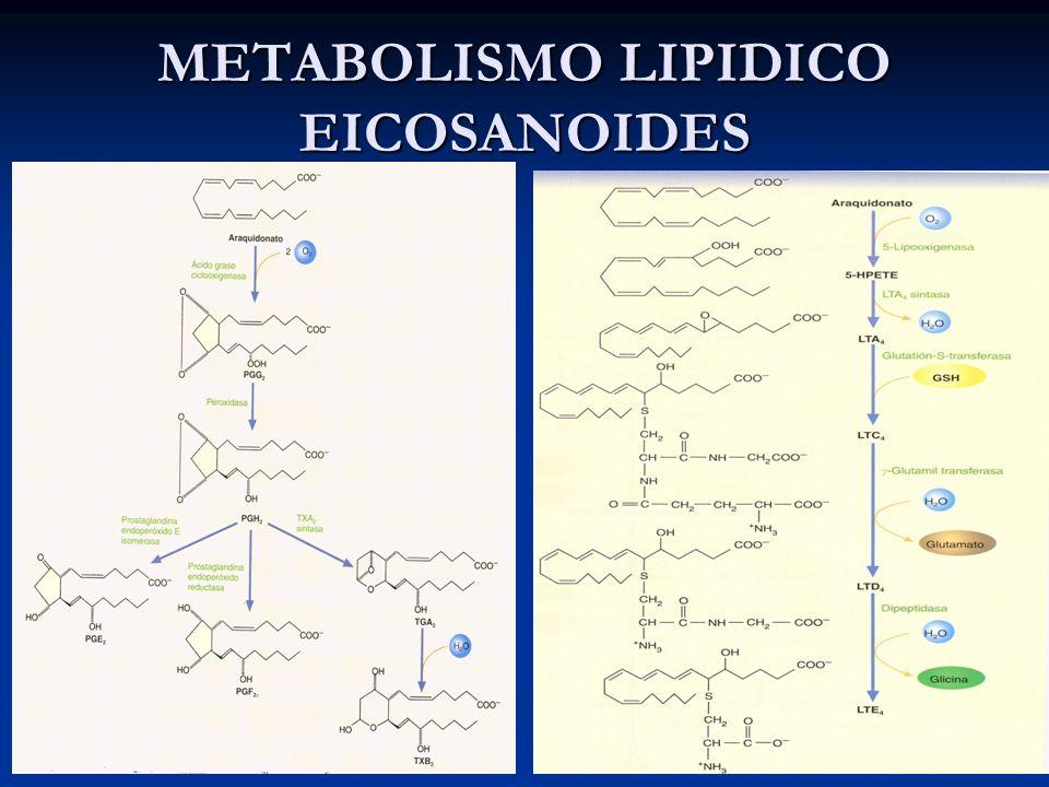 METABOLISMO LIPIDICO EICOSANOIDES