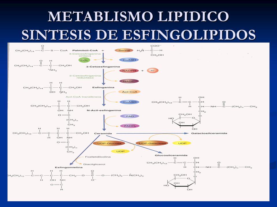 METABLISMO LIPIDICO SINTESIS DE ESFINGOLIPIDOS