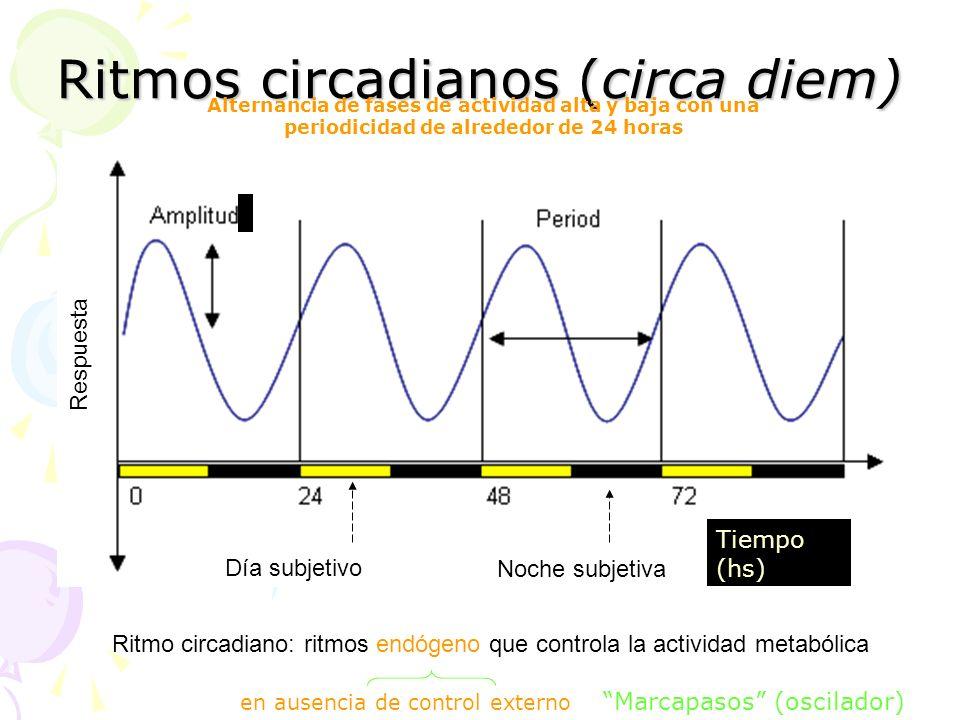 Ritmos circadianos (circa diem) L. circa = cerca; dies = díaL. circa = cerca; dies = día Ritmo circadiano: ritmos endógeno que controla la actividad m