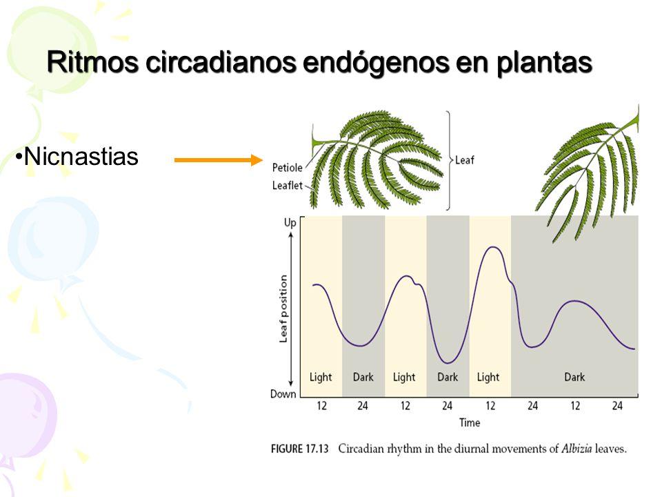 Nicnastias Ritmos circadianos endógenos en plantas