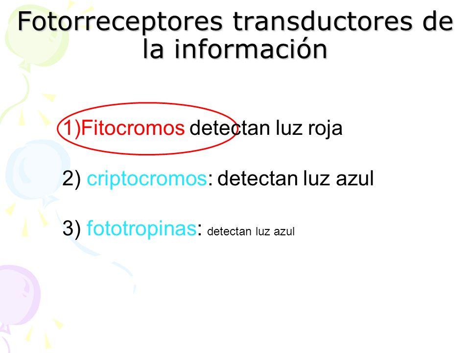 Fotorreceptores transductores de la información 1)Fitocromos detectan luz roja 2) criptocromos: detectan luz azul 3) fototropinas: detectan luz azul