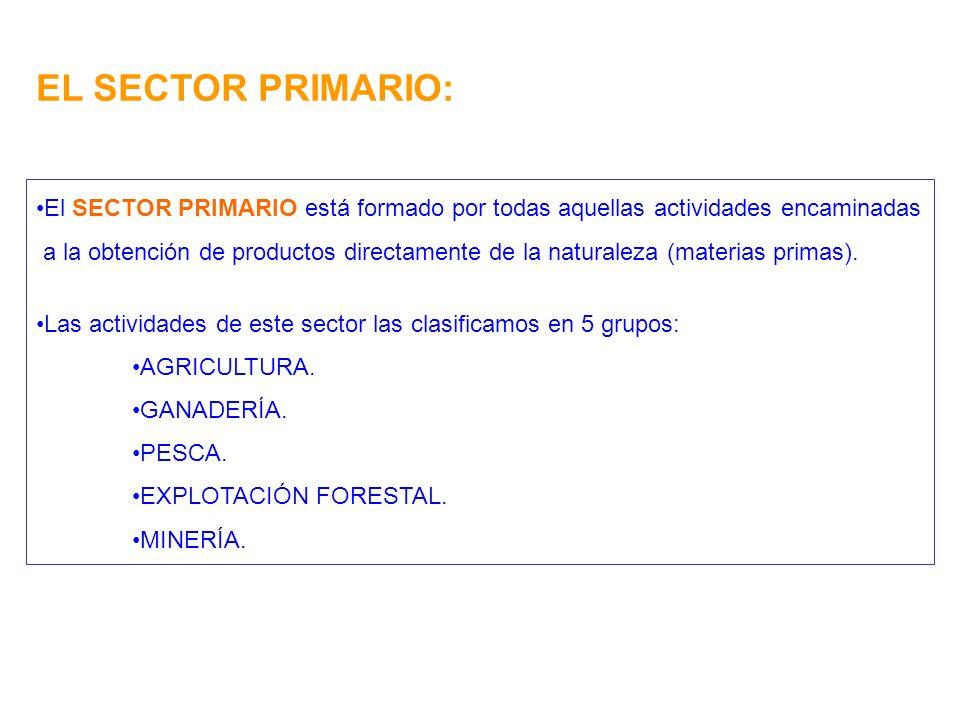EL SECTOR PRIMARIO: El SECTOR PRIMARIO está formado por todas aquellas actividades encaminadas a la obtención de productos directamente de la naturale