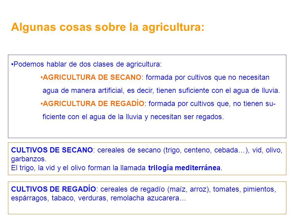 Algunas cosas sobre la agricultura: Podemos hablar de dos clases de agricultura: AGRICULTURA DE SECANO: formada por cultivos que no necesitan agua de