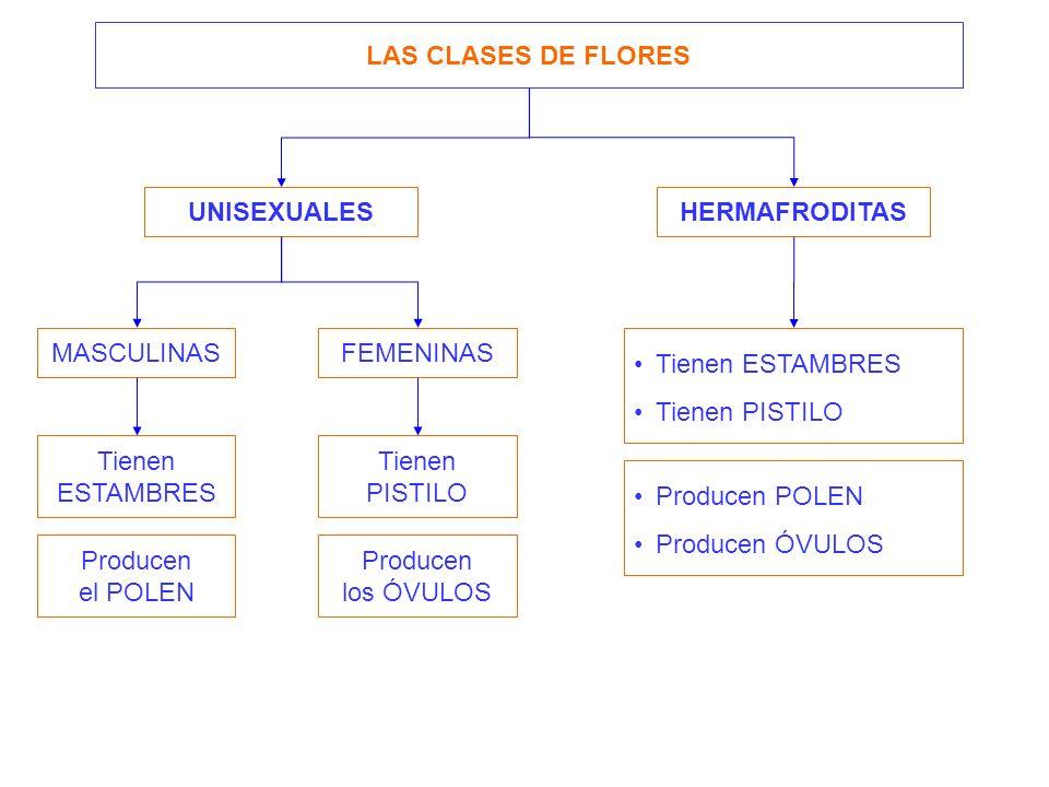 UNISEXUALES HERMAFRODITAS MASCULINASFEMENINAS LAS CLASES DE FLORES Tienen ESTAMBRES Tienen PISTILO Producen el POLEN Producen los ÓVULOS Tienen ESTAMB
