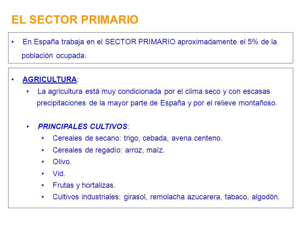 EL SECTOR PRIMARIO En España trabaja en el SECTOR PRIMARIO aproximadamente el 5% de la población ocupada. AGRICULTURA: La agricultura está muy condici