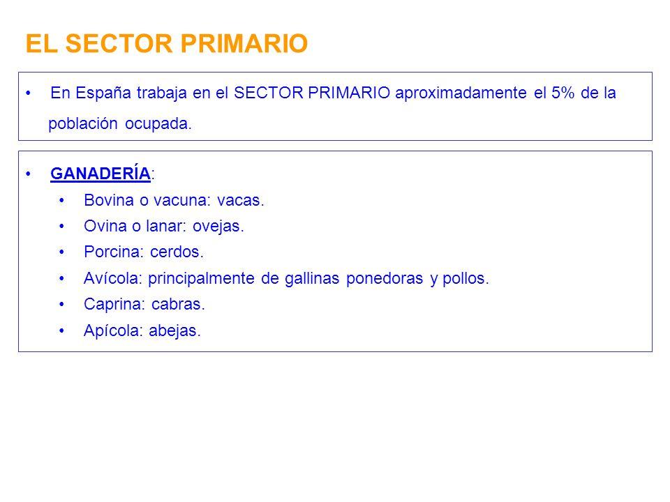 EL SECTOR PRIMARIO En España trabaja en el SECTOR PRIMARIO aproximadamente el 5% de la población ocupada. GANADERÍA: Bovina o vacuna: vacas. Ovina o l