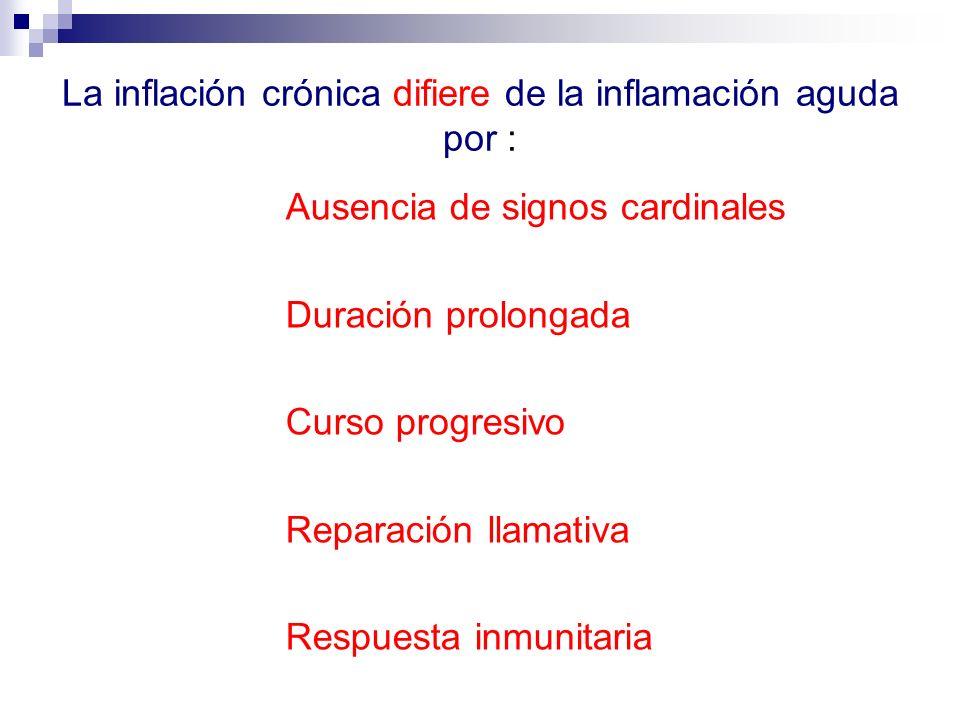 La inflación crónica difiere de la inflamación aguda por : Ausencia de signos cardinales Duración prolongada Curso progresivo Reparación llamativa Res