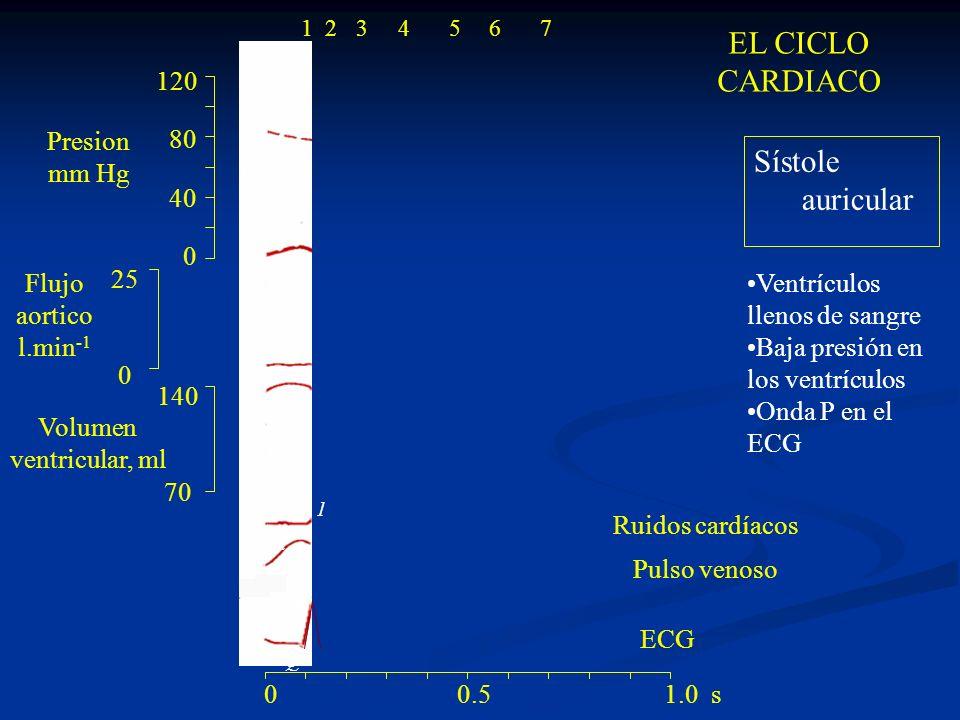 120 80 40 0 140 70 25 0 ECG a R Q S P 1 4 La válvula mitral se cierra 0 0.5 1.0 s 1234567 Contracción isovolumétrica El ventrículo se contrae.