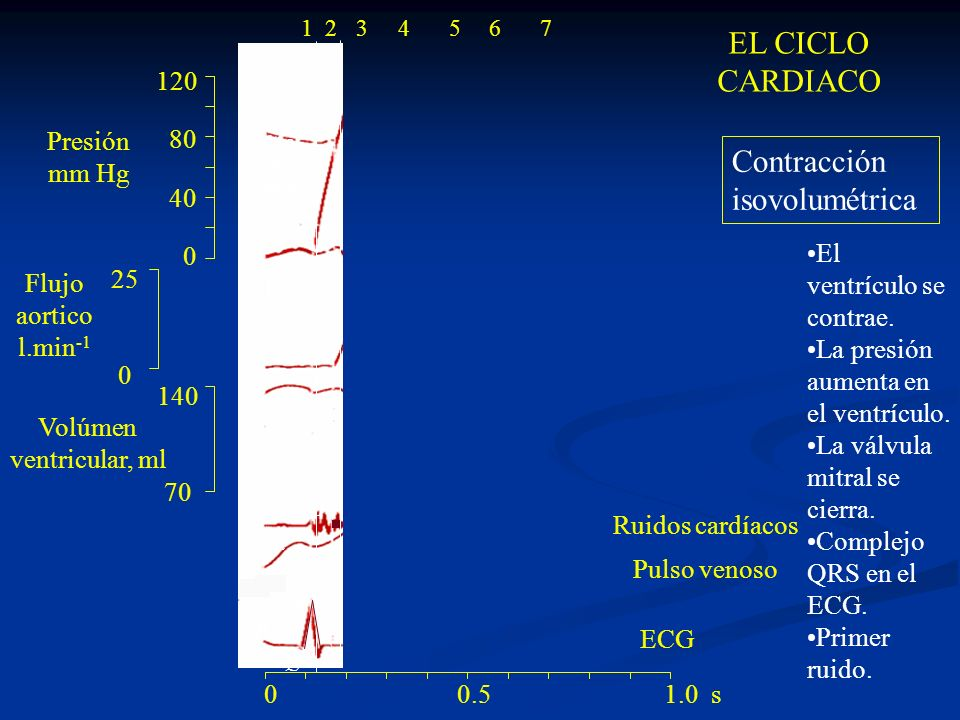 120 80 40 0 140 70 25 0 ac R Q S PT 1 24 Valvula mitral cierra Valvula aortica abre 0 0.5 1.0 s 1234567 Eyección La válvula aortica se abre.