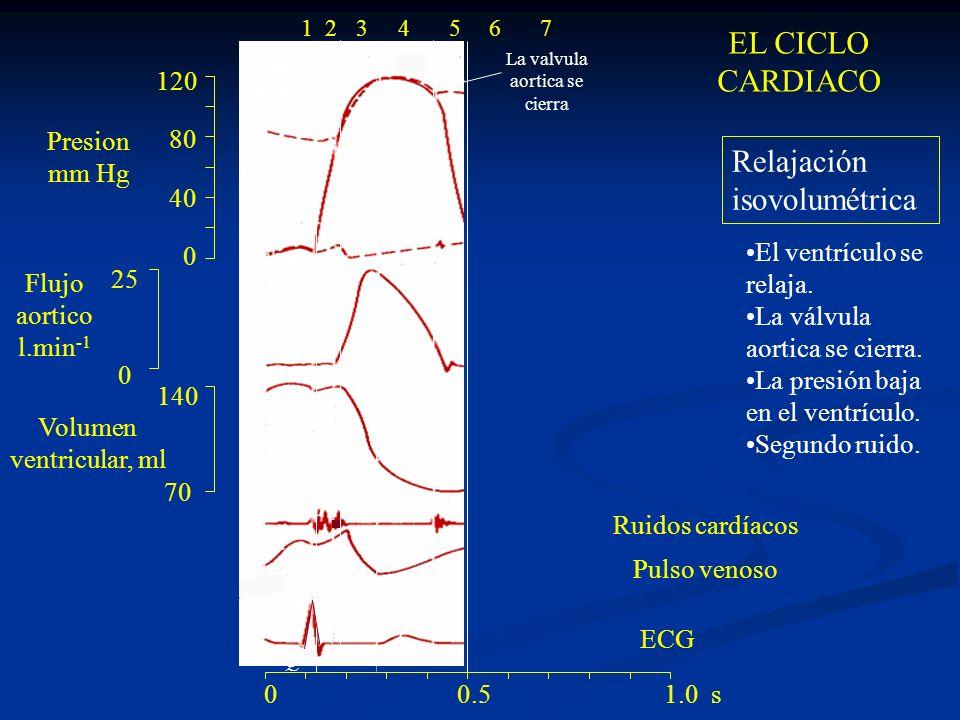 120 80 40 0 140 70 25 0 ac v R Q S PT 1 24 Valvula mitral cierra valvula aortica abre La valvula aortica se cierra 0 0.5 1.0 s 1234567 Relajación isov