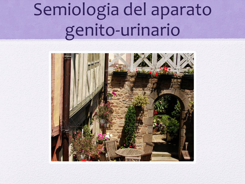 Terminología Urológica