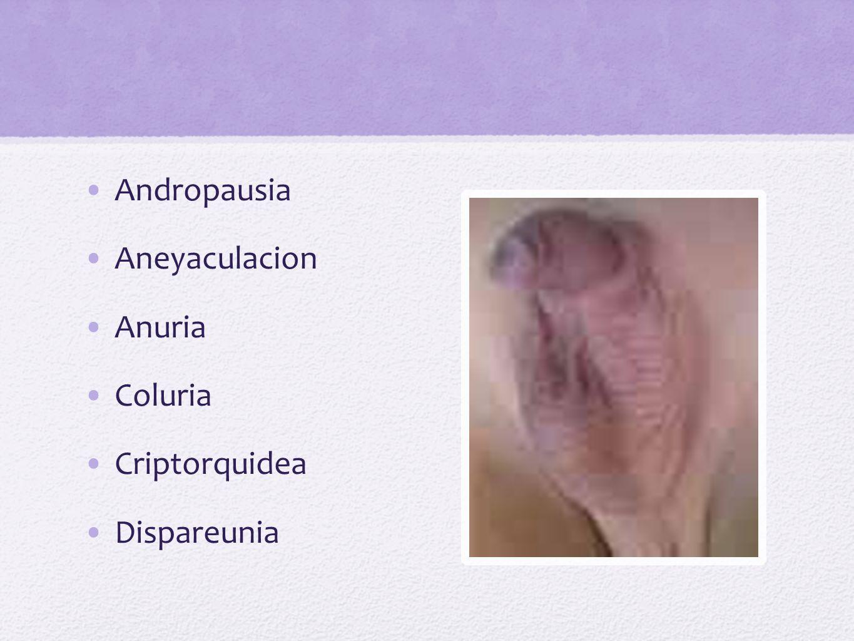 Disuria Estranguria Enuresis Fecaluria Hematuria Hemospermia Hematospermia
