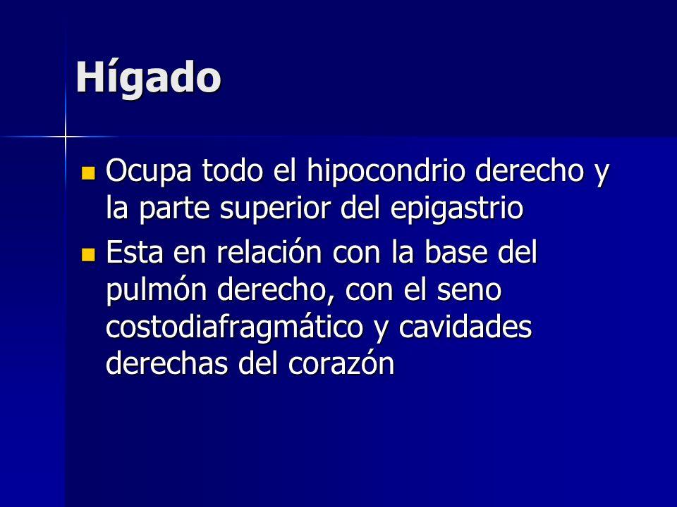 Hígado Ocupa todo el hipocondrio derecho y la parte superior del epigastrio Ocupa todo el hipocondrio derecho y la parte superior del epigastrio Esta