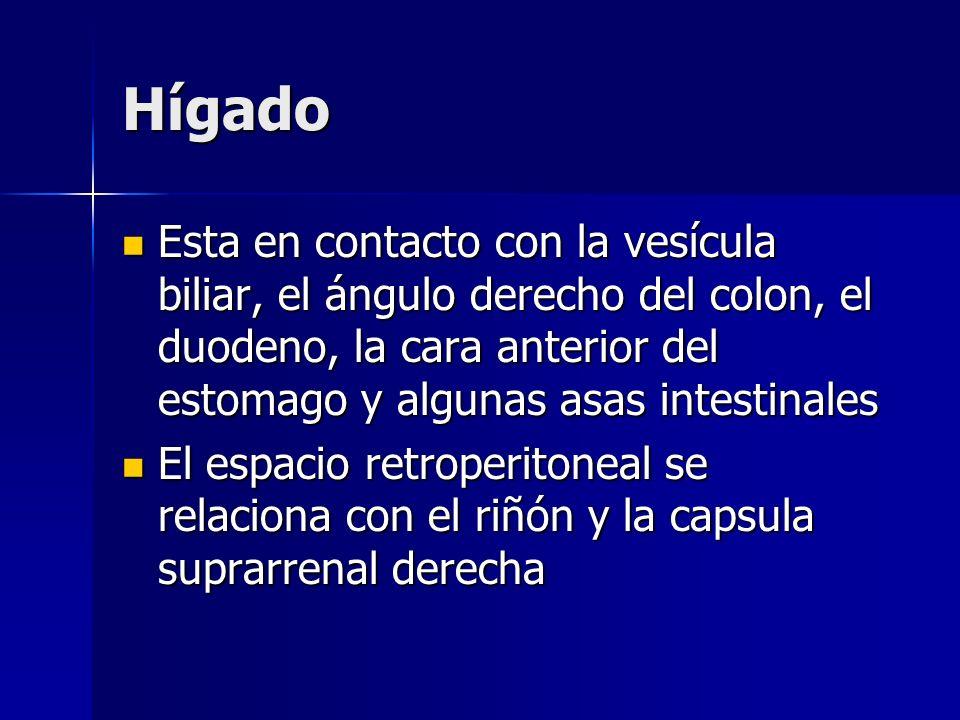 Hígado Esta en contacto con la vesícula biliar, el ángulo derecho del colon, el duodeno, la cara anterior del estomago y algunas asas intestinales Est
