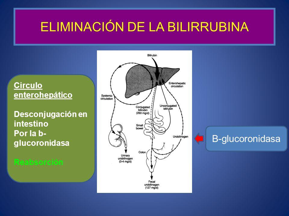 ELIMINACIÓN DE LA BILIRRUBINA B-glucoronidasa Circulo enterohepático Desconjugación en intestino Por la b- glucoronidasa Reabsorción