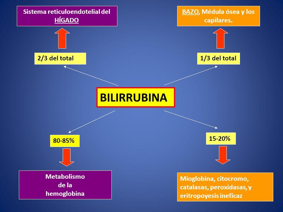 BILIRRUBINA 80-85% 15-20% Metabolismo de la hemoglobina Mioglobina, citocromo, catalasas, peroxidasas, y eritropoyesis ineficaz Sistema reticuloendote