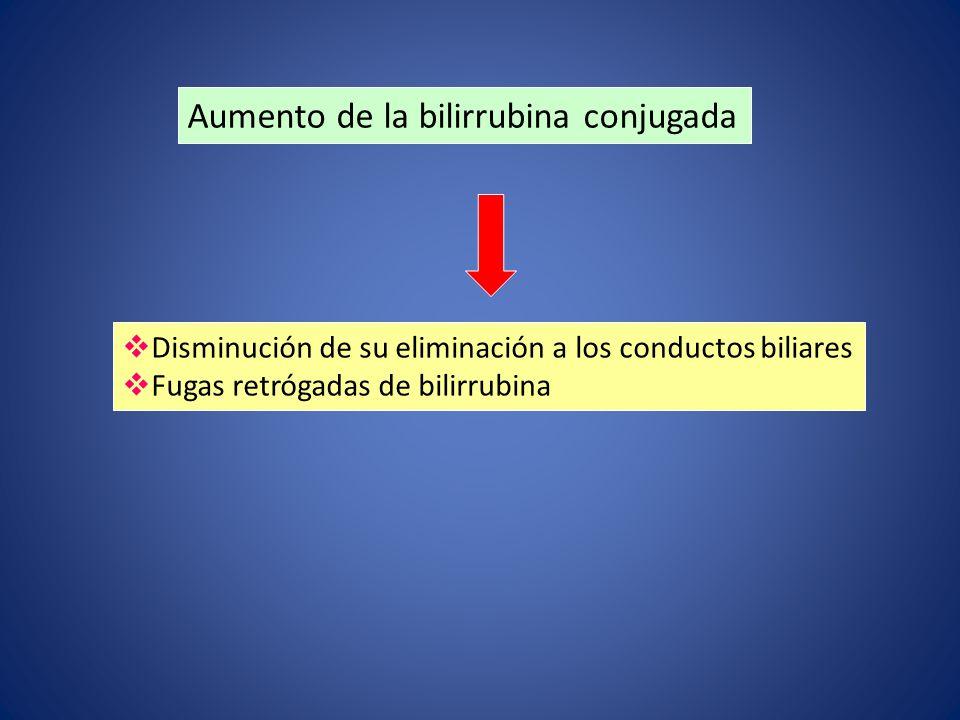 Aumento de la bilirrubina conjugada Disminución de su eliminación a los conductos biliares Fugas retrógadas de bilirrubina