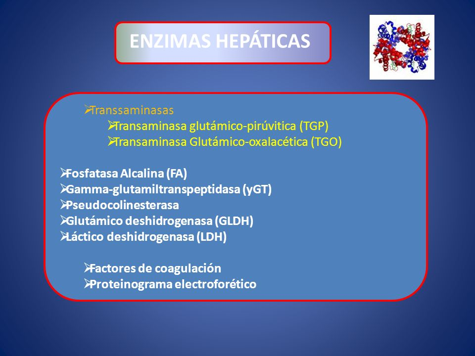 Transsaminasas Transaminasa glutámico-pirúvitica (TGP) Transaminasa Glutámico-oxalacética (TGO) Fosfatasa Alcalina (FA) Gamma-glutamiltranspeptidasa (