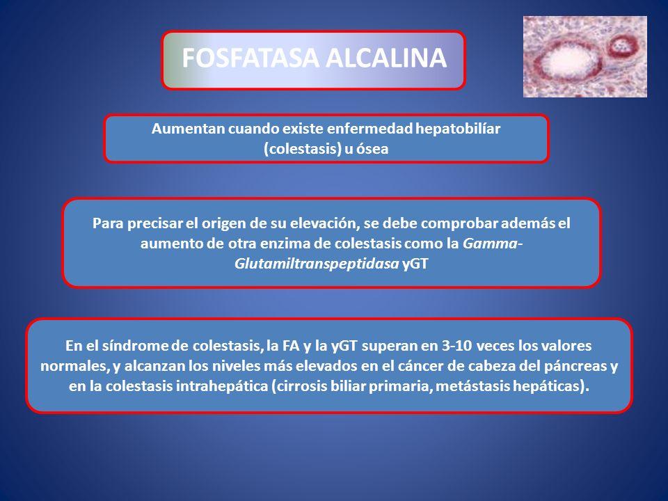 Aumentan cuando existe enfermedad hepatobilíar (colestasis) u ósea FOSFATASA ALCALINA En el síndrome de colestasis, la FA y la yGT superan en 3-10 vec