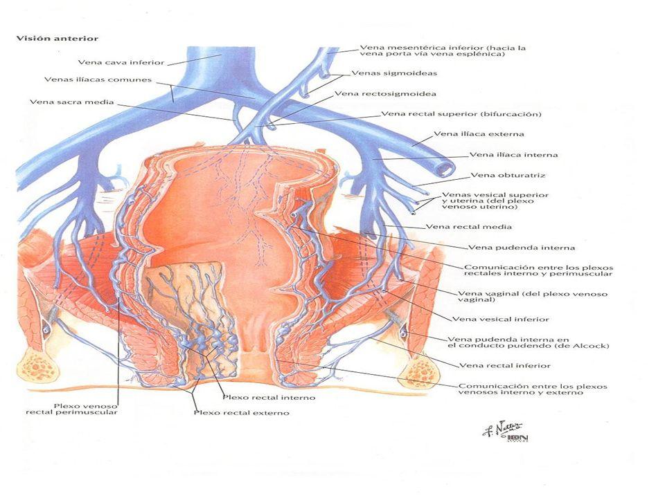 Abscesos anales Etiología: 20% secundarios a otras enfermedades o traumatismos 20% secundarios a otras enfermedades o traumatismos 80% secundarios a infecciones producidas por gérmenes de la superficie cutánea e infecciones de las glándulas anales 80% secundarios a infecciones producidas por gérmenes de la superficie cutánea e infecciones de las glándulas anales