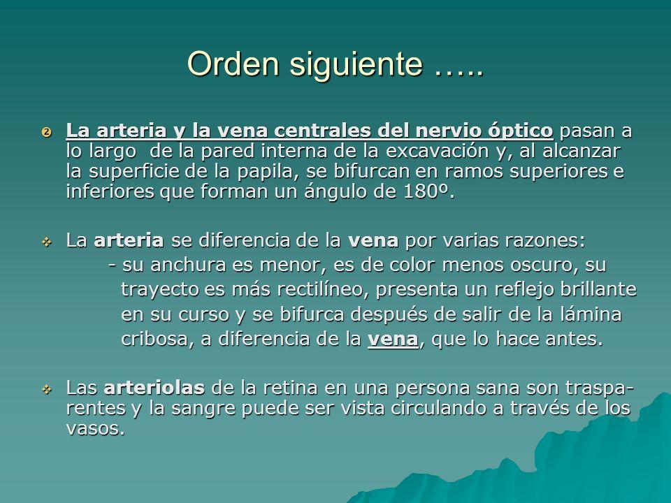 Orden siguiente ….. La arteria y la vena centrales del nervio óptico pasan a lo largo de la pared interna de la excavación y, al alcanzar la superfici
