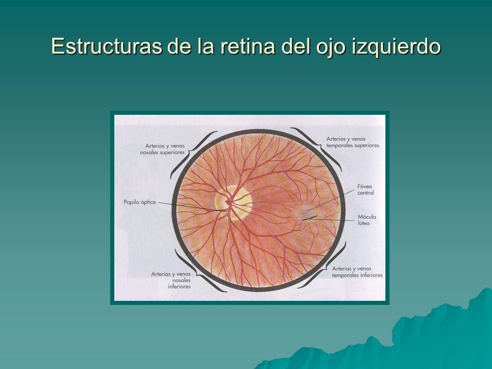 Estructuras de la retina del ojo izquierdo