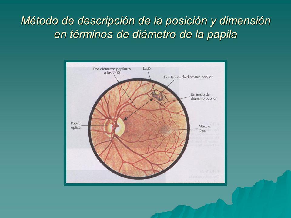 Método de descripción de la posición y dimensión en términos de diámetro de la papila