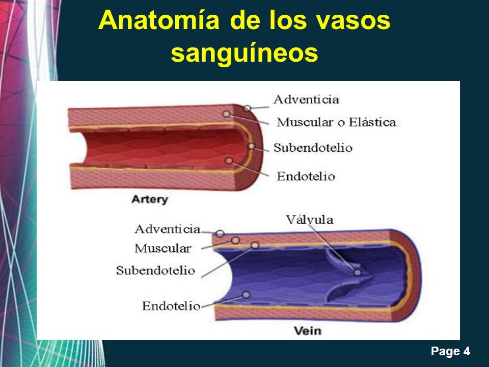 Free Powerpoint Templates Page 4 Anatomía de los vasos sanguíneos