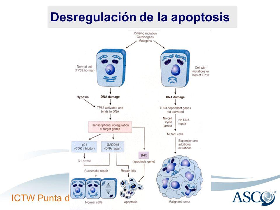 ICTW Punta del Este, Uruguay Desregulación de la apoptosis