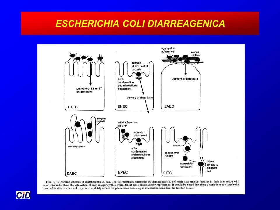 DISTRIBUCION GEOGRAFICA ENTEROPATOGENOSDISTRIBUCION BacteriasMundial CampylobacterMundial, Tailandia GiardiaRegiones montañosas, Rusia CryptosporidiumRusia, Kenia CyclosporaPerú, Nepal, Haití RotavirusMundial, México