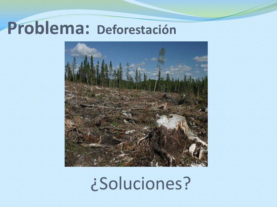 Problema: Deforestación ¿Soluciones?