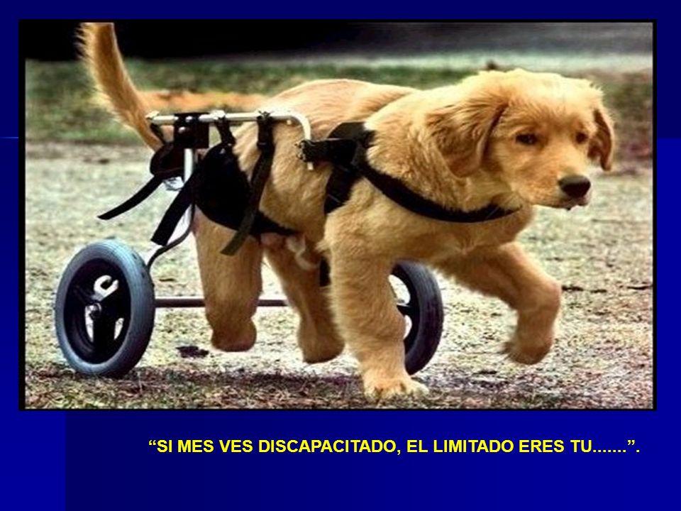 SI MES VES DISCAPACITADO, EL LIMITADO ERES TU........