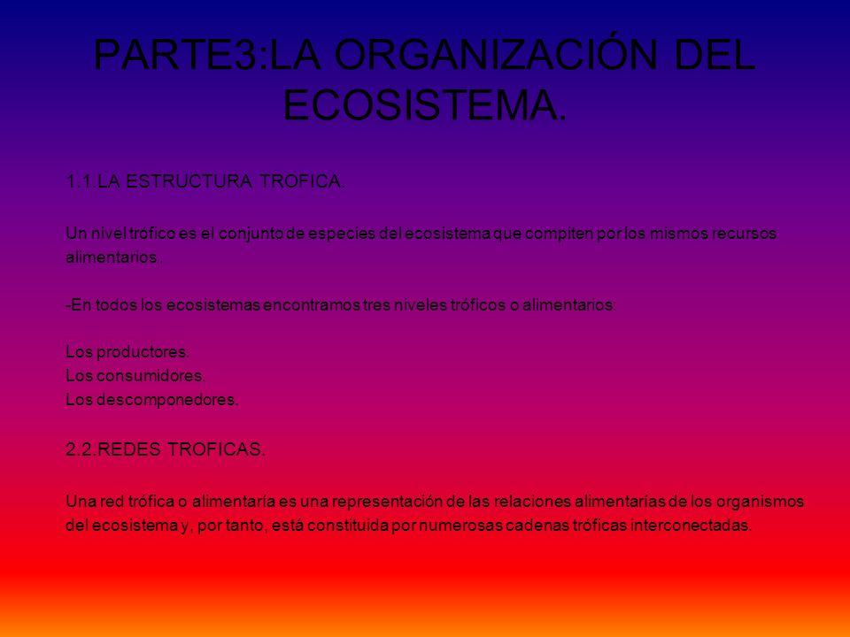 PARTE3:LA ORGANIZACIÓN DEL ECOSISTEMA. 1.1.LA ESTRUCTURA TROFICA. Un nivel trófico es el conjunto de especies del ecosistema que compiten por los mism