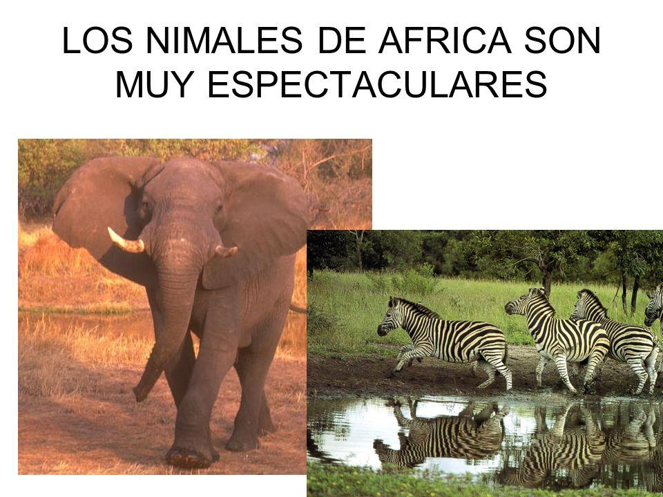 LOS NIMALES DE AFRICA SON MUY ESPECTACULARES