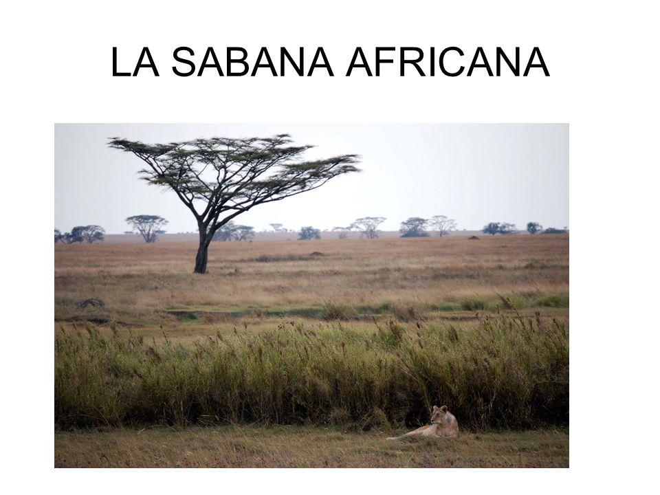 LA SABANA AFRICANA