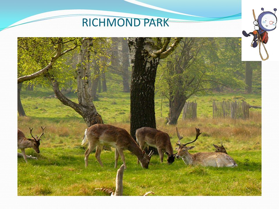 RICHMOND PARK