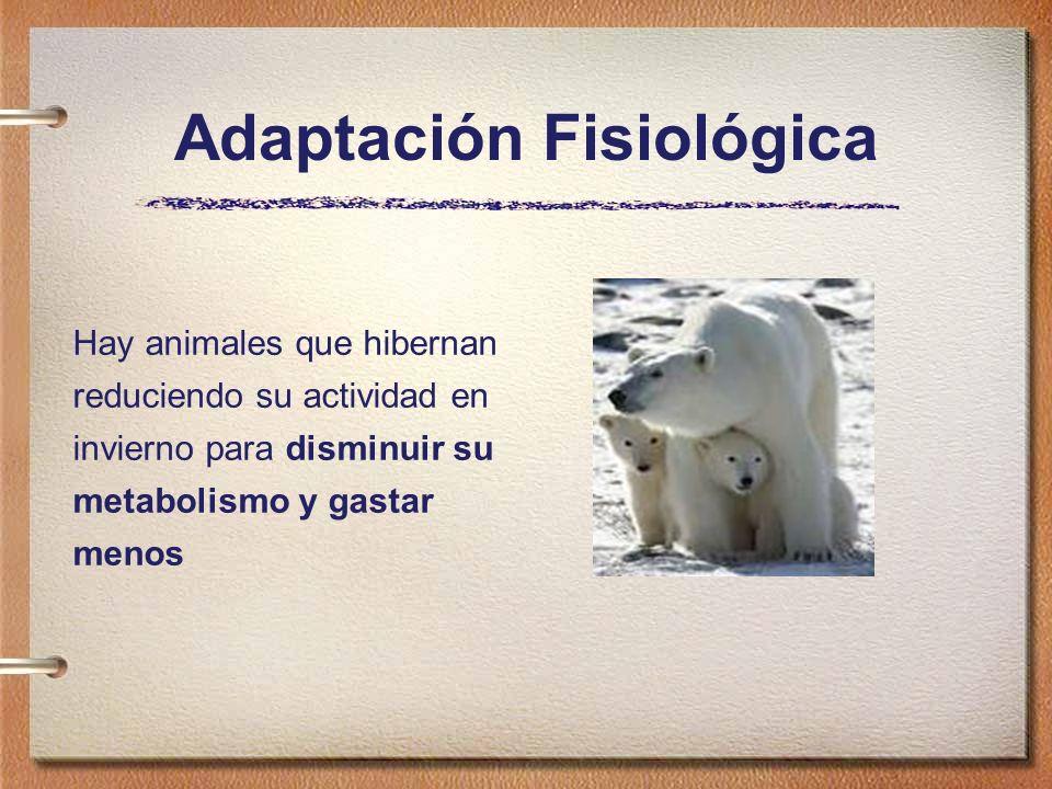 Hay animales que hibernan reduciendo su actividad en invierno para disminuir su metabolismo y gastar menos Adaptación Fisiológica
