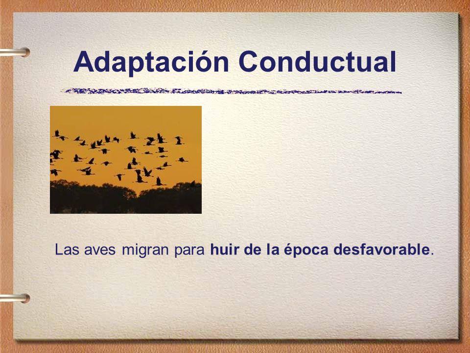 Adaptación Conductual Las aves migran para huir de la época desfavorable.